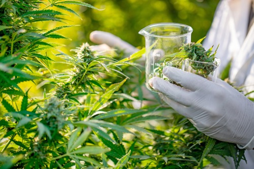 Two firms act as Australian medicinal cannabis company makes Canadian acquisition