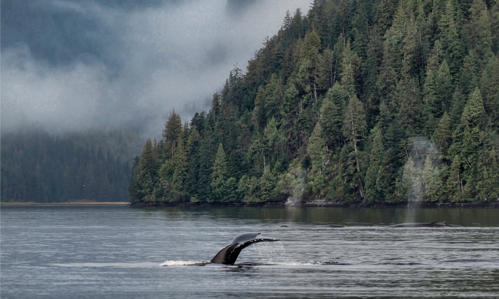 Marine Protected Area network off B.C. Coast could provide a template: West Coast Environmental Law