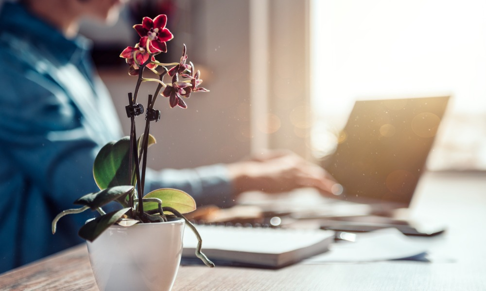 Office plants help boost workers' mental health: study