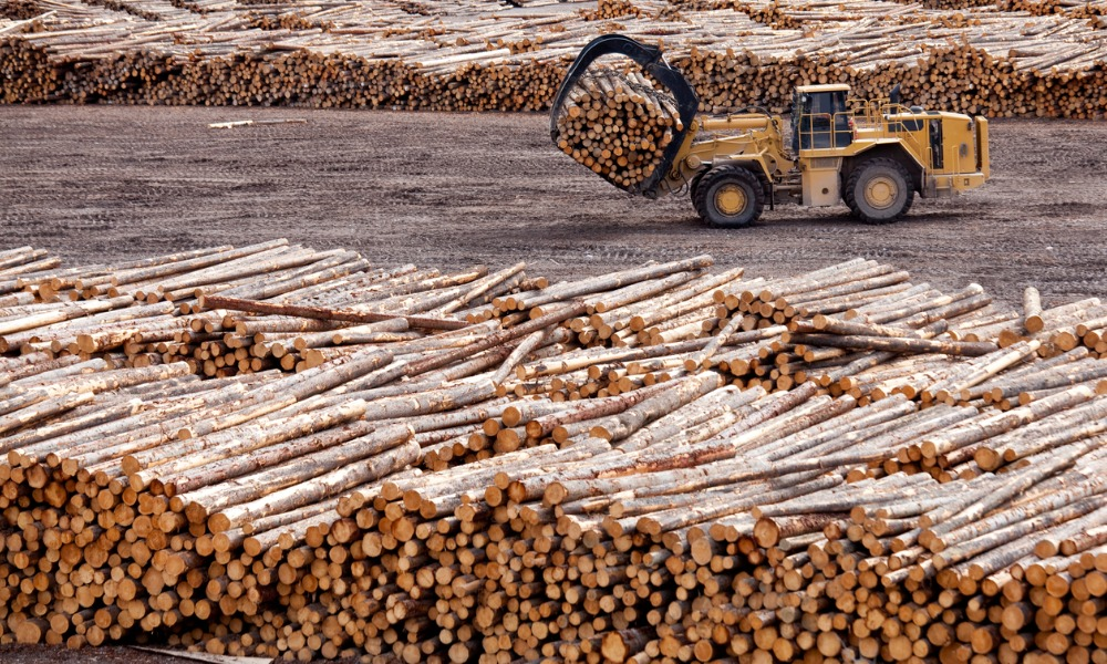 B.C. opens forestry job placement offices in 5 communities
