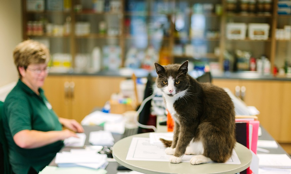 Foul language, pets at work still frowned upon by managers: survey