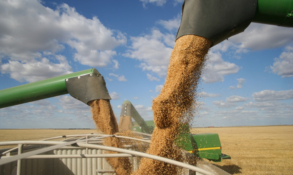 Grain and oilseed industry facing labour shortage: report