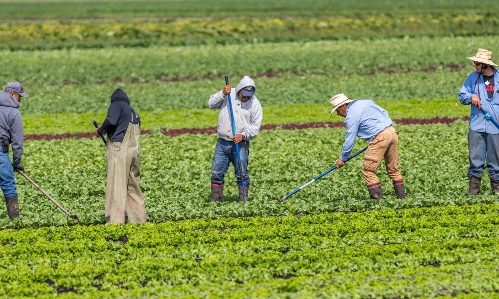 Feds propose changes to protect temporary foreign workers