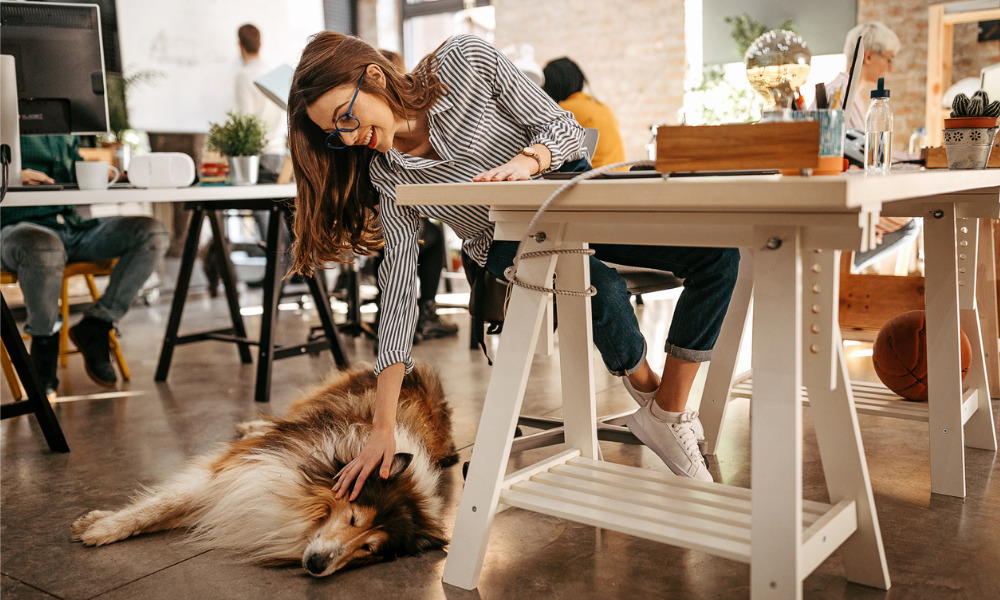 Why a pet-friendly policy makes sense