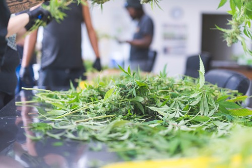 Hub taps Simplifya for license verification of cannabis clients