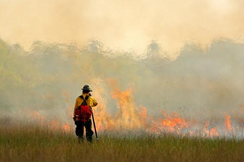 Revealed – the key to preventing bushfire risk?