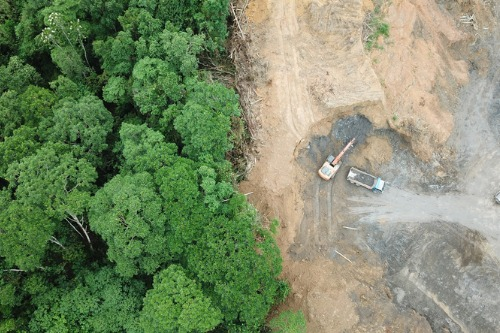 AXA to invest $1.74 billion to fighting deforestation