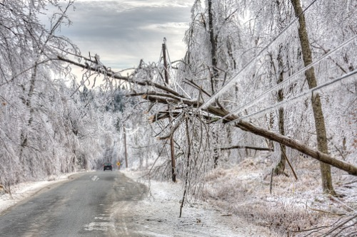 Manitoba to provide disaster assistance for October snowstorm damage