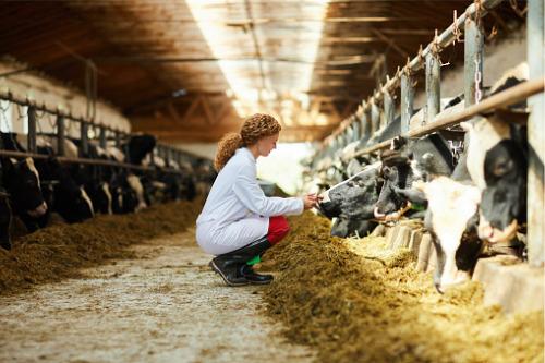 Saskatchewan offers additional $10 million funding for livestock farmers