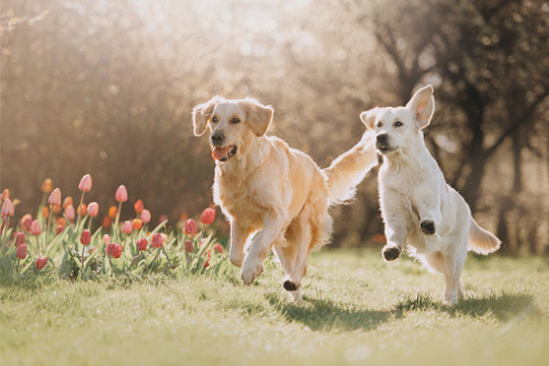 Petline launches new pet health insurance product