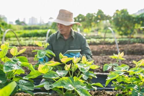 China's agricultural insurance market reaches $521 billion sum insured