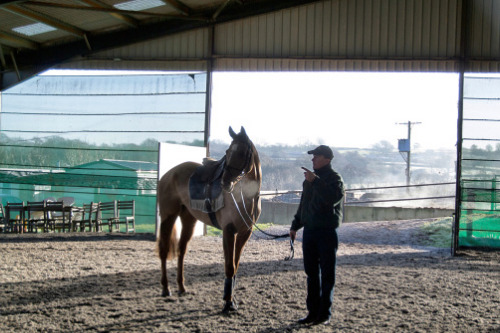 Horse trainer investigated for insurance fraud