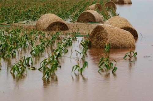 Insurer urges flood-stricken farmers to access mental health support
