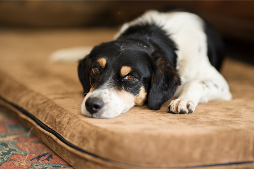 """Pet-n-Sure outlines potential signs of """"winter depression"""" in pets"""