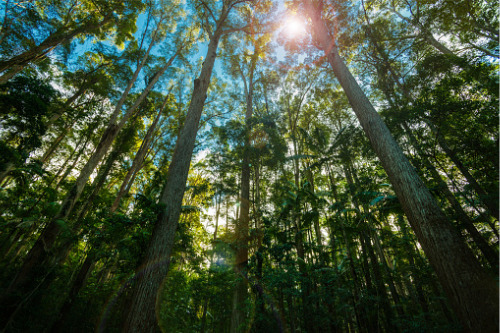 Carbon farming to remain a vital climate resilience tool