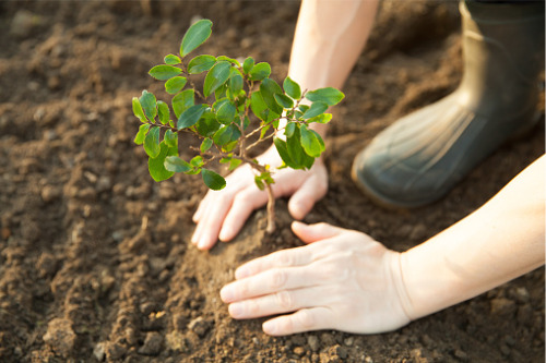 Zurich gives backing to reforestation project