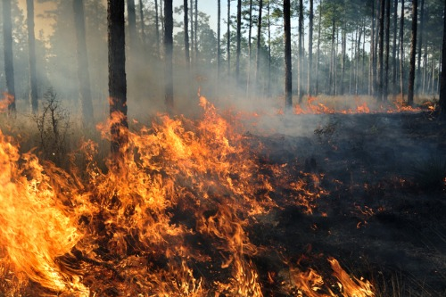 Major insurers to improve fire damage definitions