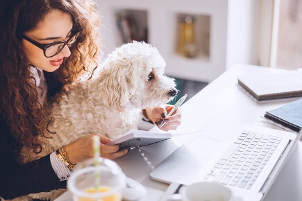 PetSure announces product improvements