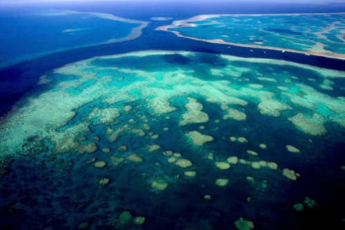 The Great Barrier Reef should be insured - Clyde & Co