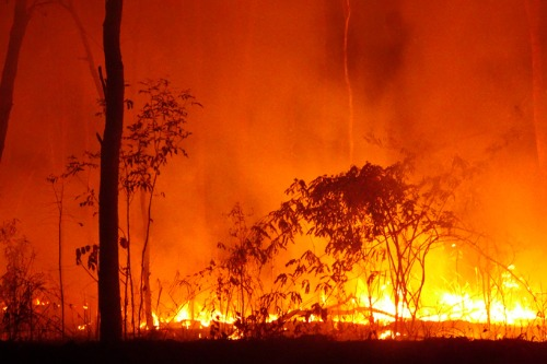 Suncorp, IAG freeze policy sales in some bushfire-hit areas