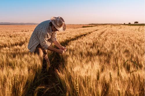 IAG warns farmers