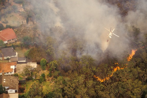 "PERILS reveals initial estimate for ""peak"" Australian bushfire losses"