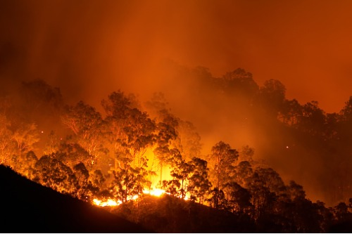 Report calls for government-led bushfire insurance