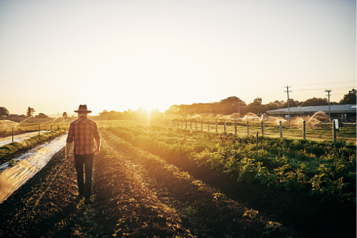 Risk management in Australian agriculture stalled by