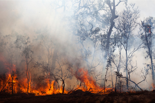 Calls for insurance incentives for farmers reducing fire risks
