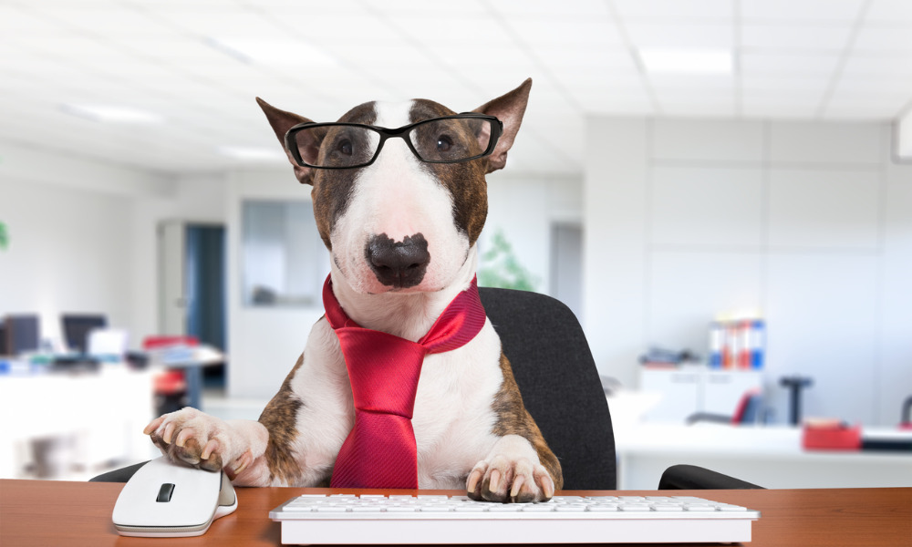 NZ's Top Office Dog competition is finally here