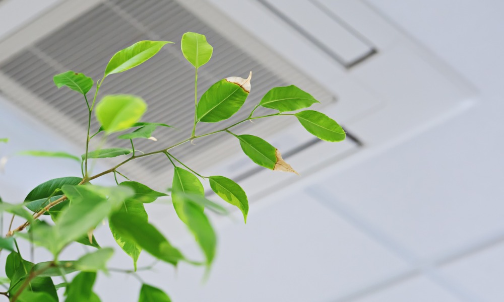 Office air may be negatively affecting worker health, productivity: Report