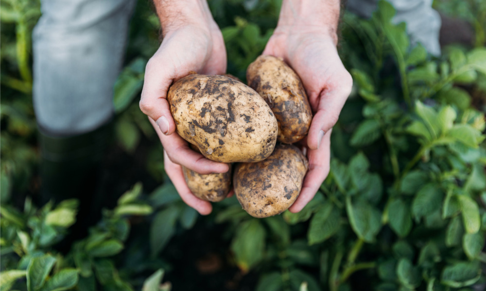 New Brunswick potato farmers calling for governments to move 'in the right direction' now
