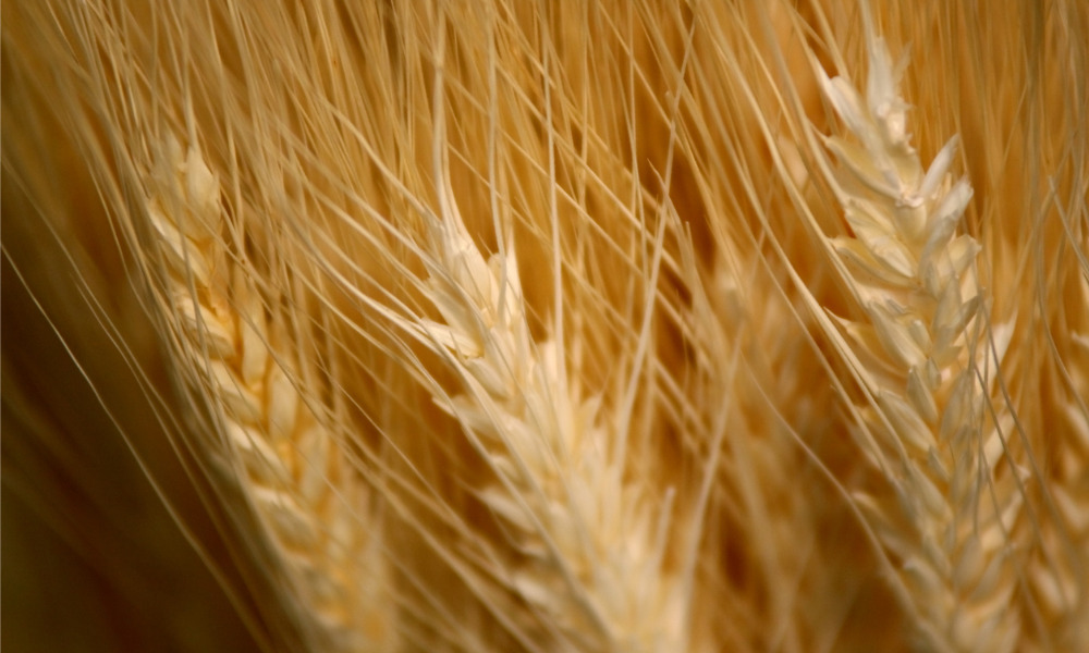 Federal, Ontario governments add funding for agri-food workers' safety amid COVID-19 pandemic