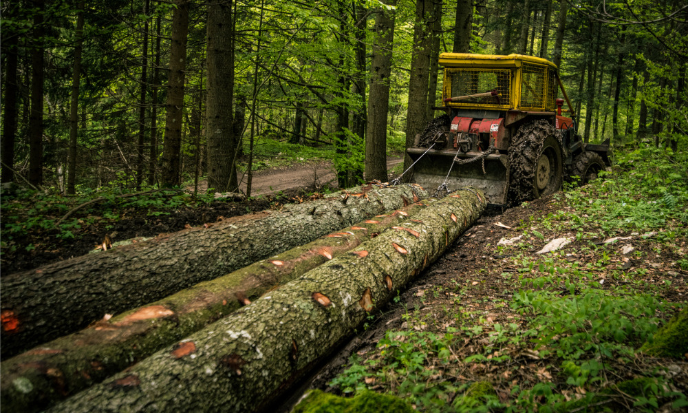 Worker fatally injured in forestry operation, firm fined $73K