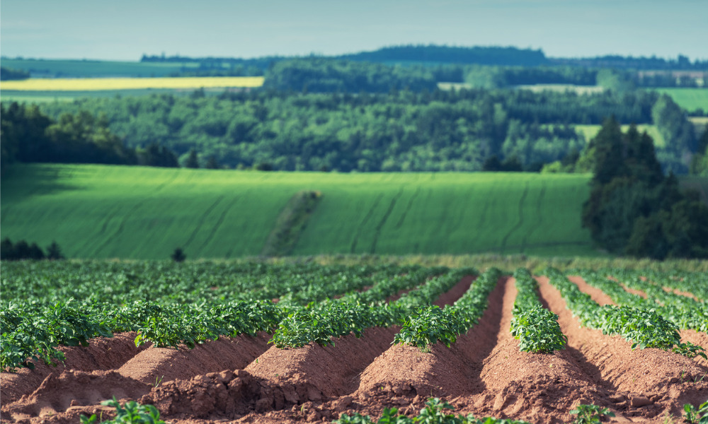 Federal government invests for P.E.I. farm workers