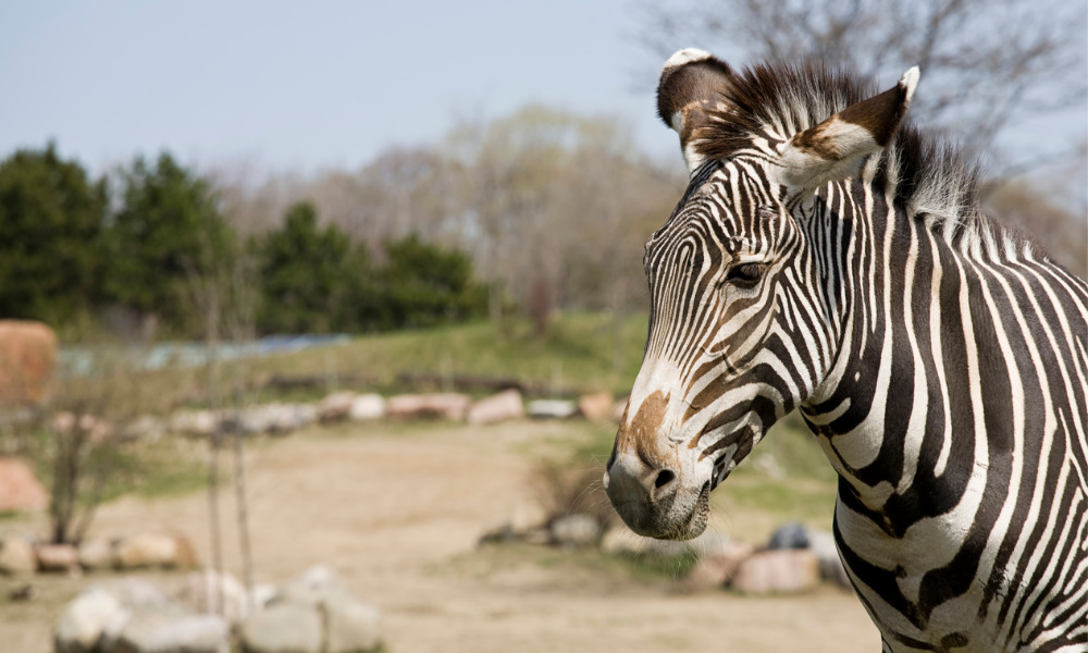 How Toronto Zoo is keeping visitors, workers, and animals safe amid COVID-19