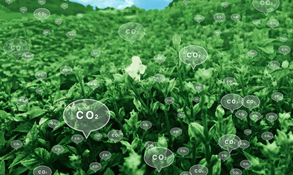 Canada possibly getting two new carbon capture hubs by 2030