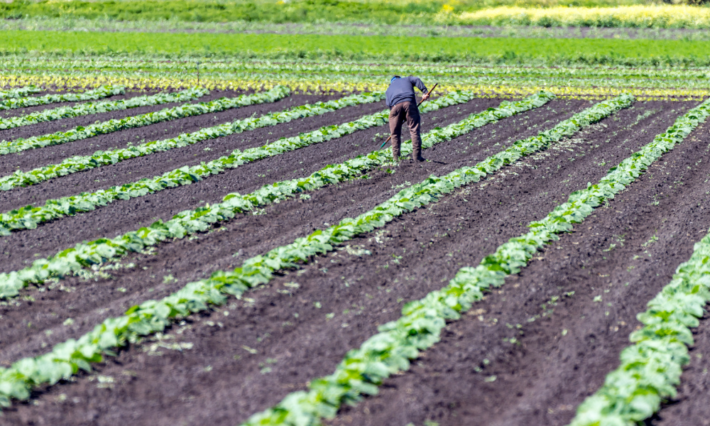 Advocacy group questions deaths of five migrant farmworkers since March
